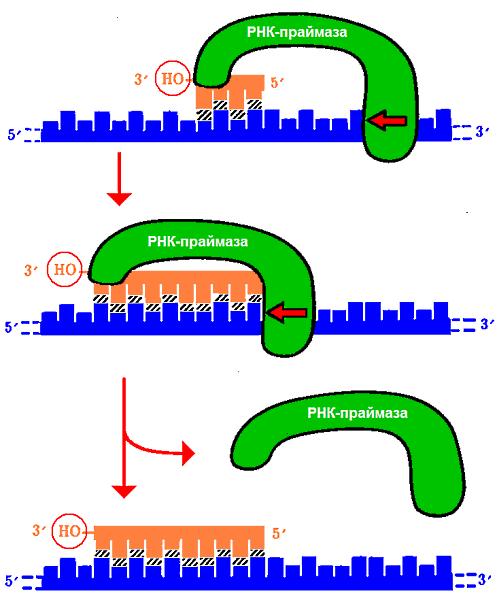 Схема реакции синтеза короткой